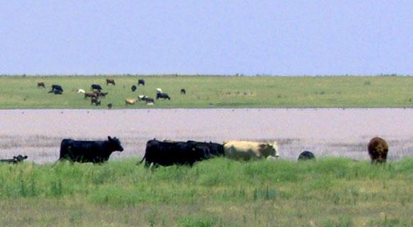 livestock-water
